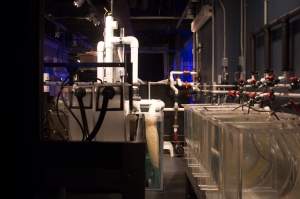 Behind the Scenes Tanks for Growing Jellyfish