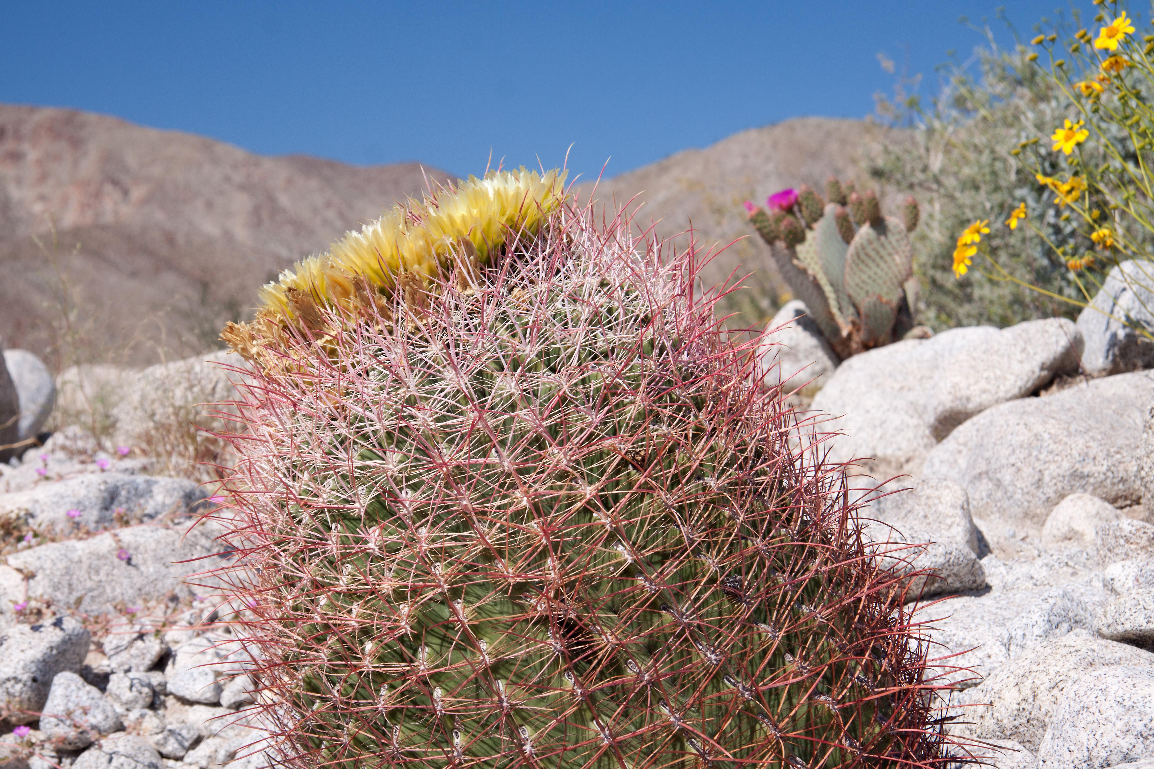 desert naturetime page 2