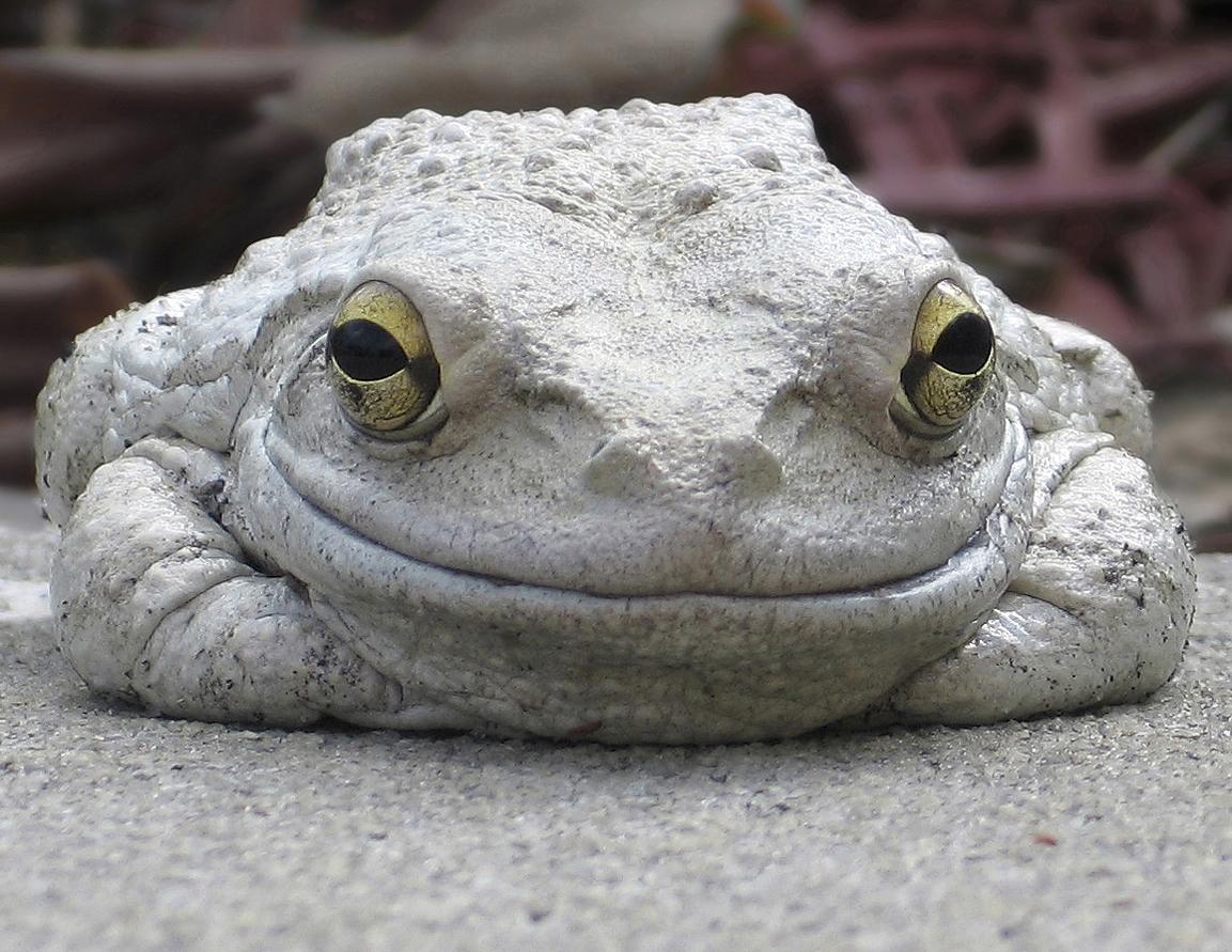 [Image: frog-smiling.jpg]