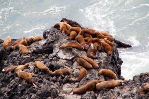 Sea Lions on Rocks Below