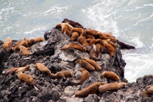 Sea Lions on Rocks Below