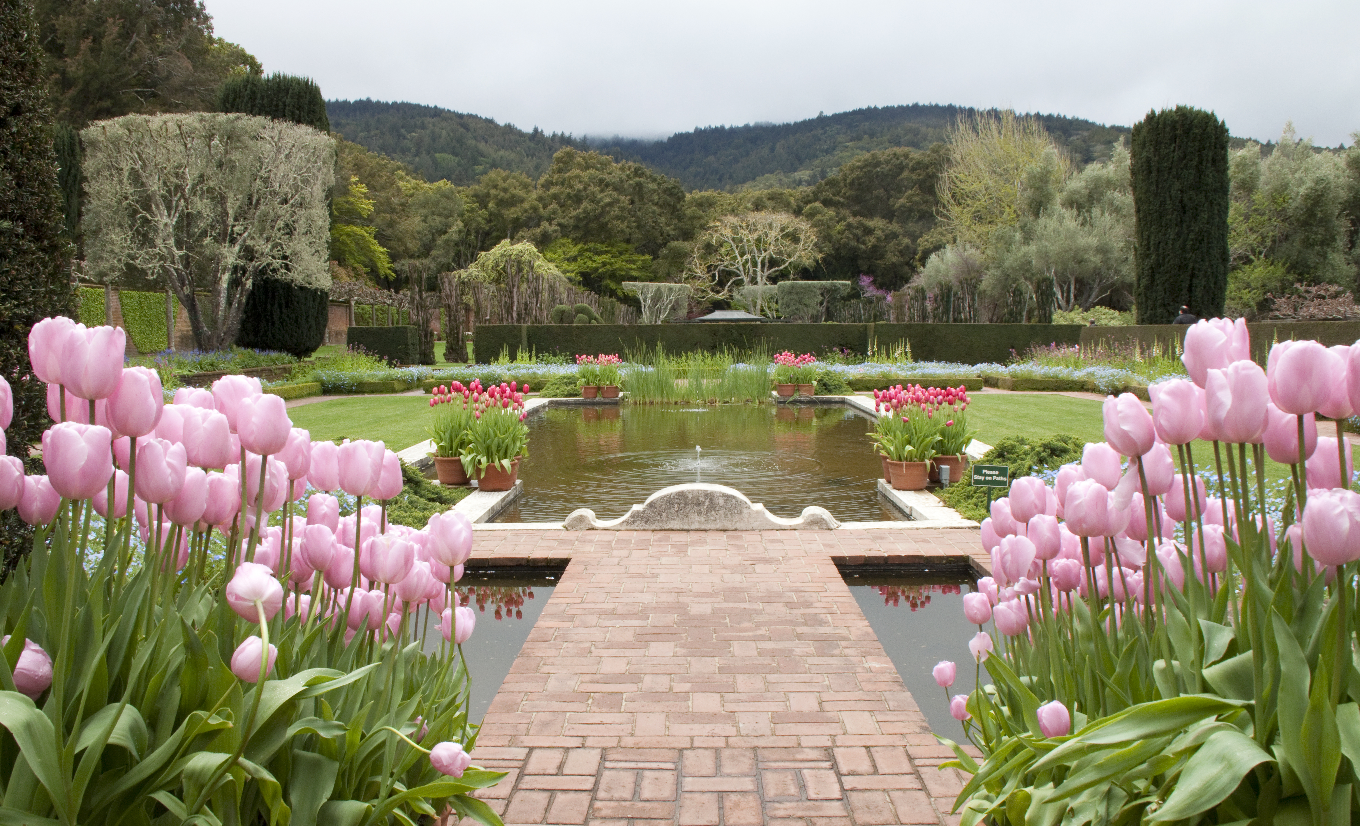 Filoli tulips and reflecting pool naturetime for Garden pictures