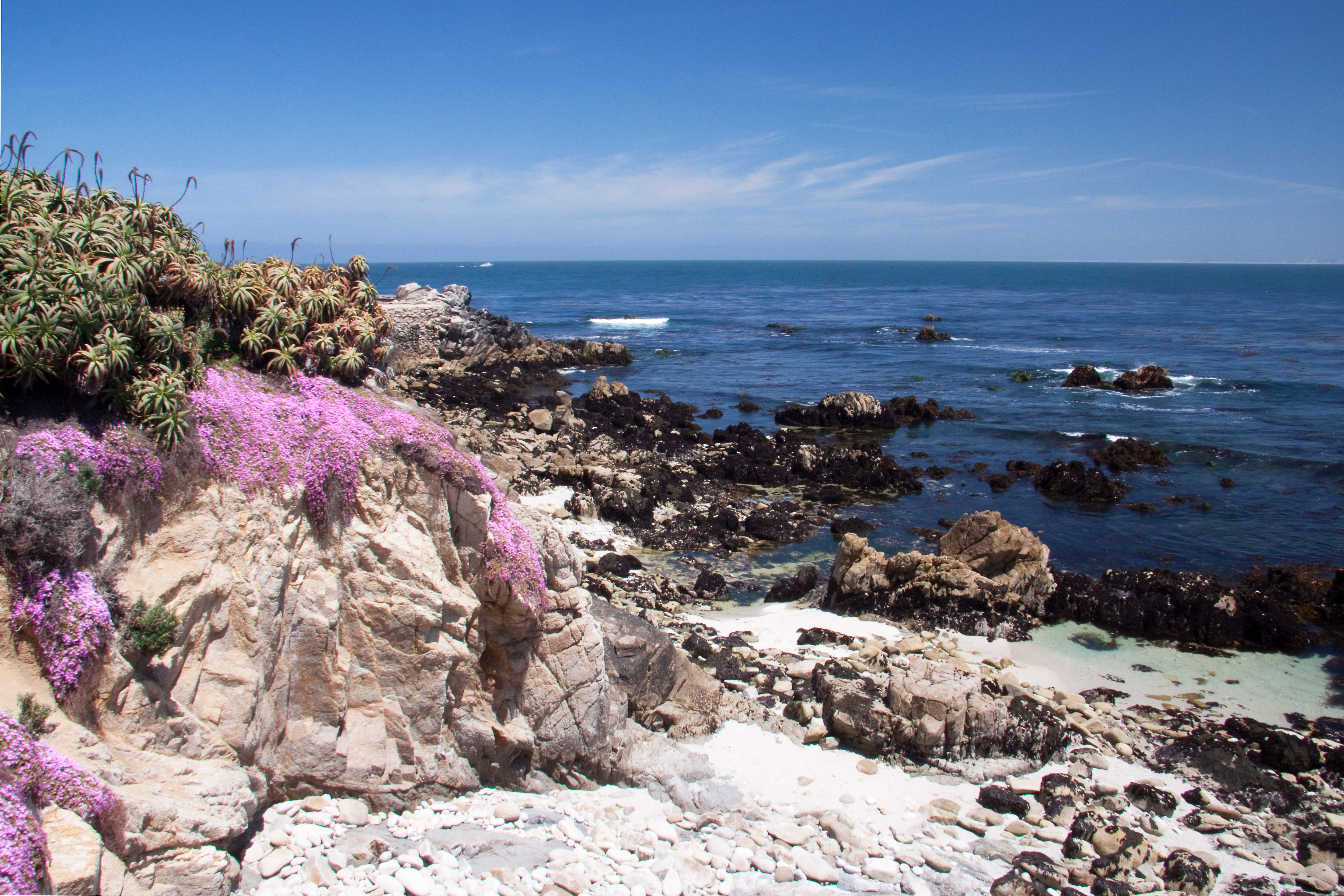 Pink carpet trailing ice plants along coast at monterey naturetime 2945 in monterey stunning pink flower carpet mightylinksfo Images