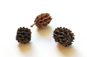 Australian Pinecones