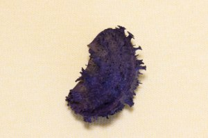 Bristly Porcupine Seed
