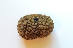 Sea Coconuts in Pod