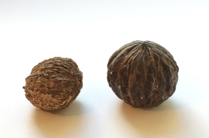 Tropical Walnuts