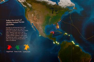 Sea Turtle Migration Map