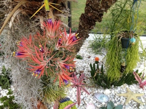Reef Garden View with Blooming Bromeliad