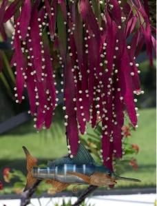 Reef Garden View with Swordfish and Pseudorhipsalis Cactus
