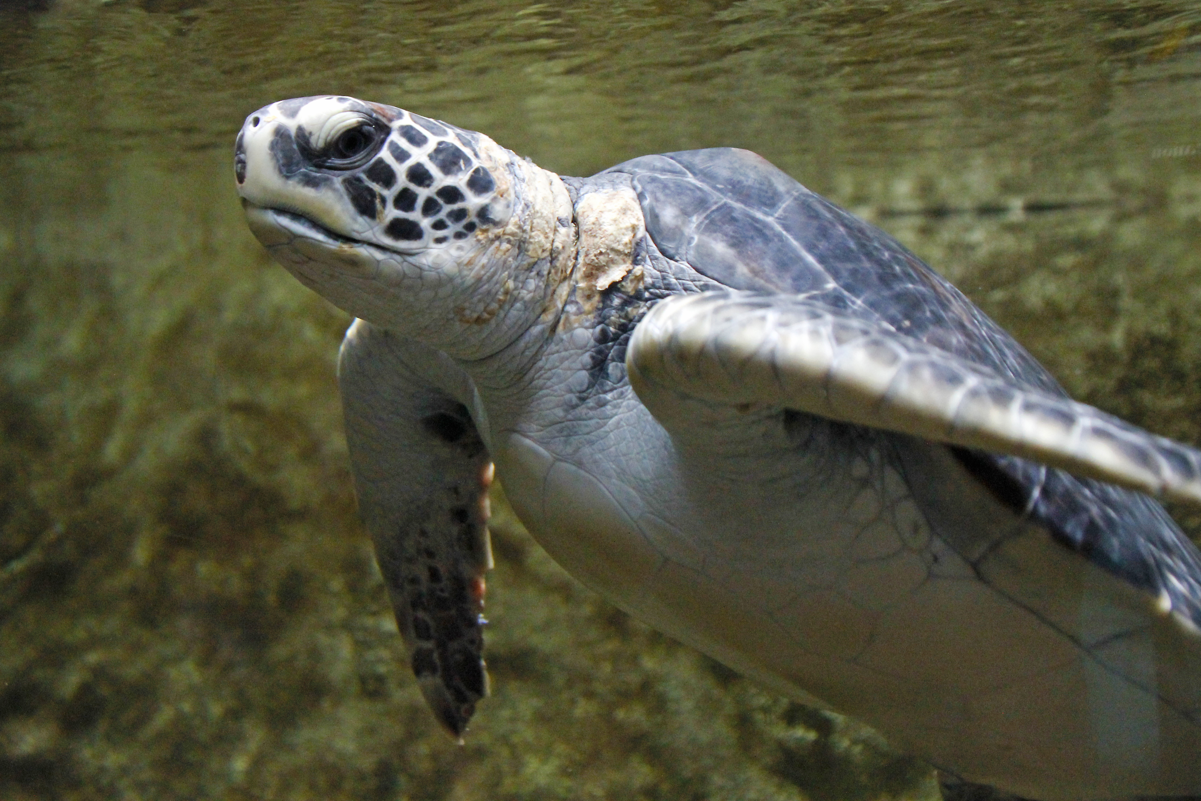 ... 4205 ? 2803 in Brevard County, Florida: Best Sea Turtle Nesting Site