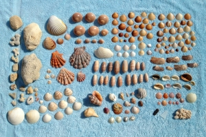 Our Collection of Shells