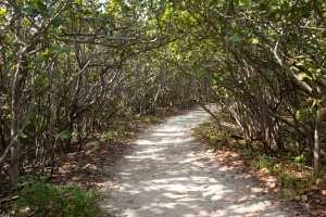 Sea Grape Tunnel Path to Beach