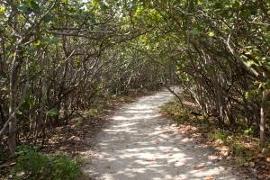 Sea Grape Tunnel Path to Beach