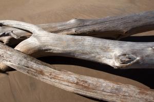 Driftwood Logs