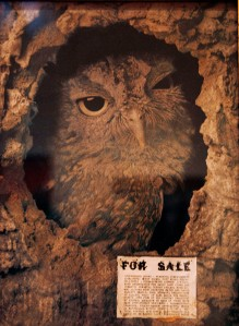 San Francisco MOMA Owl Painting