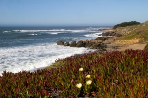 Pebble Beach Overlook