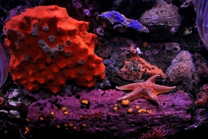 Pacific Marine Life