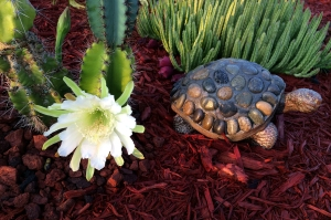 Night Blooming Cereus Cactus Flower and Turtle Statue