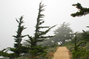 Cypress Point Trail in Fog