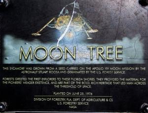 Moon Tree Sign