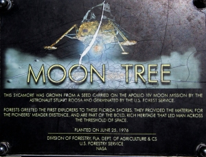 Moon Tree Sign