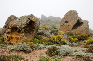 Sedimentary Rock Pair among Wildflowers