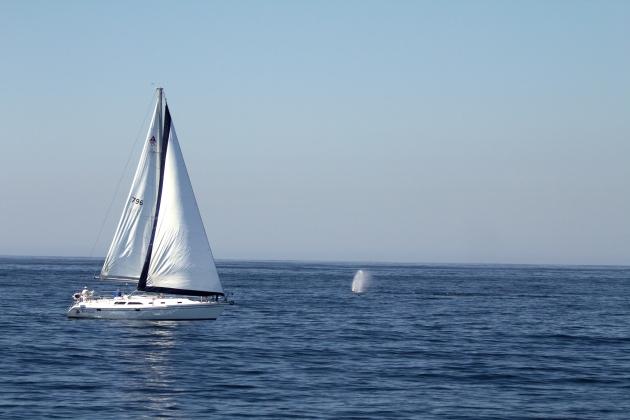 COLOR BLUE:  Sailing among Humpback Whales, Santa Barbara, California.