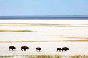 Bison Crossing Salt Flats
