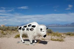 White Buffalo Statue (Sacred Dreams)