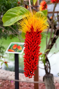 Monkey's Brush Tree