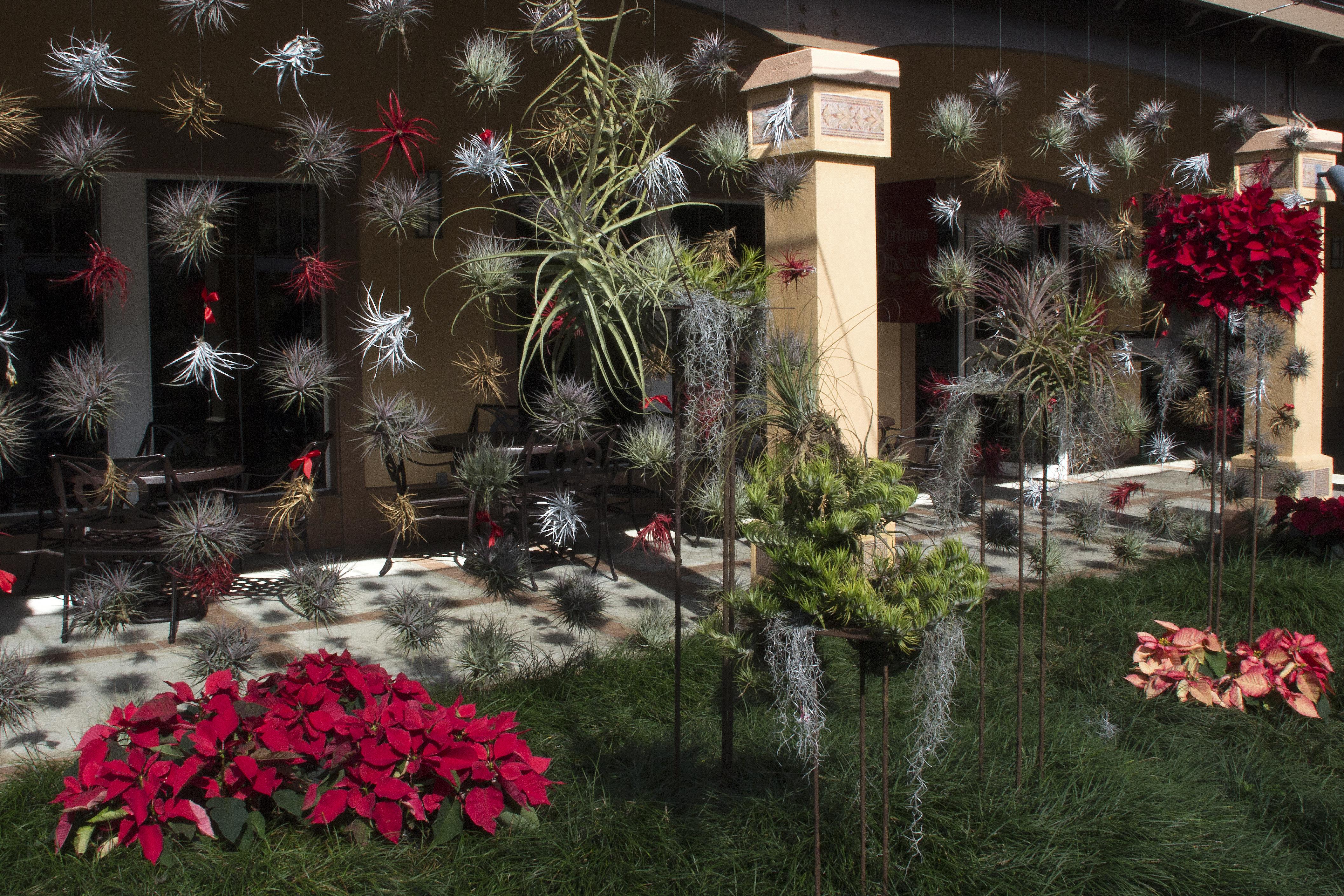 Bromeliad Wall at Christmas | naturetime