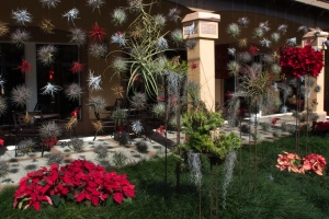 Bromeliad Wall at Christmas