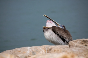 Brown Pelican Pouch Inside Out