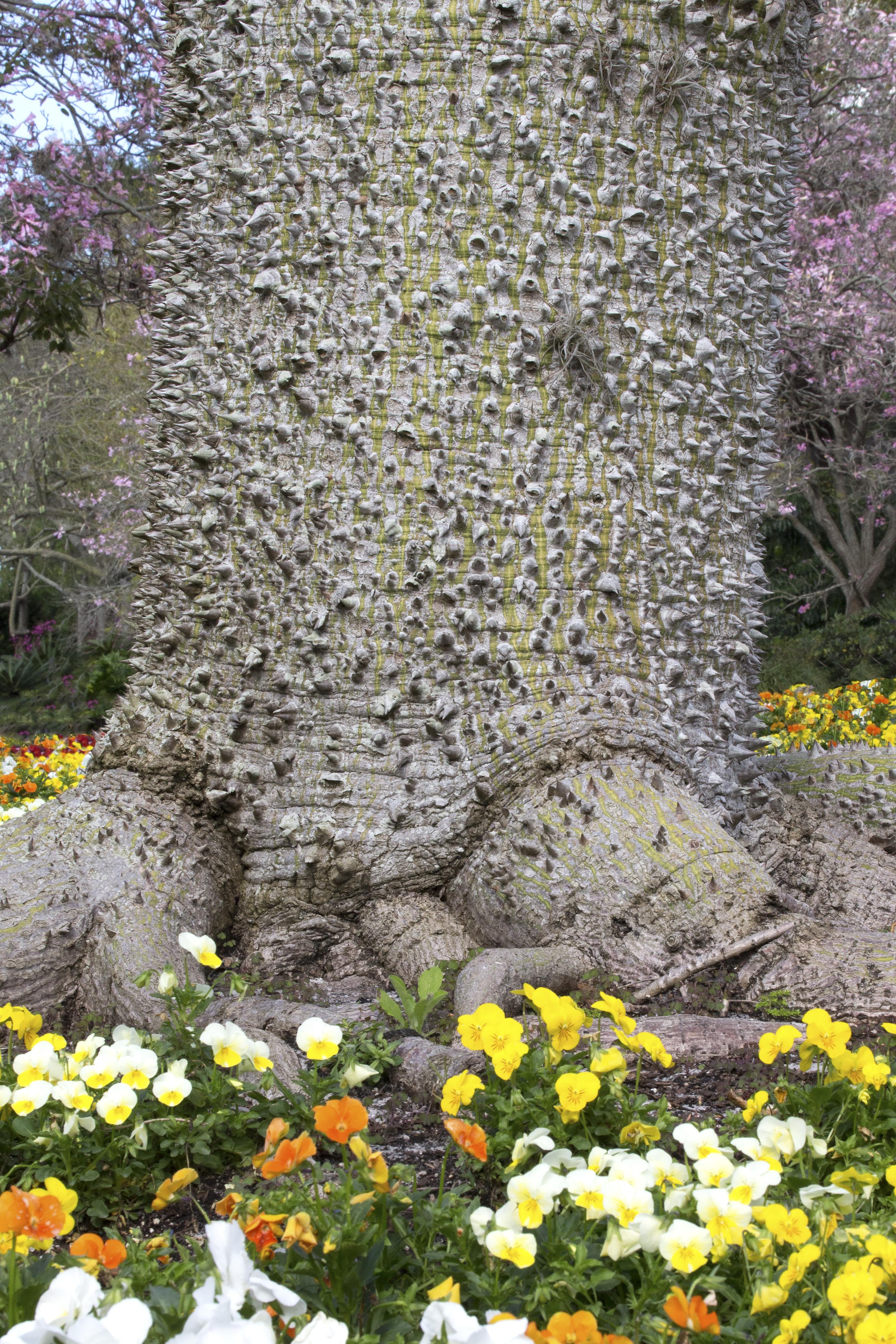 Thorny Trunk Of Tree Naturetime