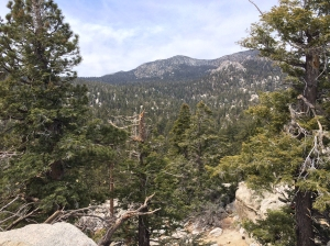 Mount San Jacinto State Park Forest at Top