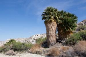 Pygmy Grove Oasis