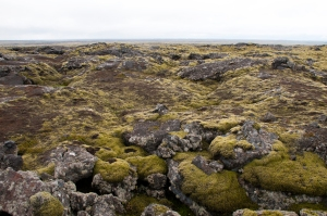 Green Moss-Covered Lava Field