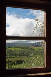 Inside Window Looking Out (dandelions growing on roof)