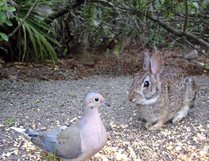 Bunny and Dove