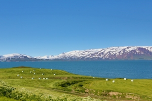 Farm with Hay Bales in Field (looks like giant marshmallows), Northern Iceland