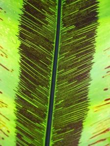 Beautiful Lined Leaf
