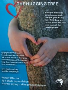 Hugging Tree Sign Describing Epiphytes