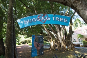 """Hugging Tree Sign with Row of Bromeliads """"Hugging"""" the Top"""