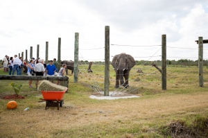 National Elephant Center Open House