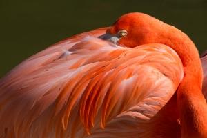 Flamingo Dark Pink
