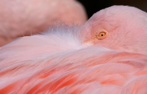 Flamingo Light Pink Closeup