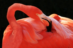 Backlit Flamingo