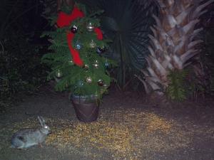 Bunny and Tree