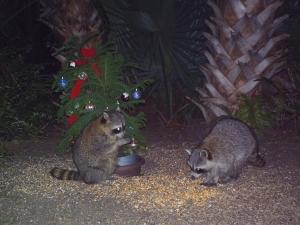 Raccoon Pair and Tree
